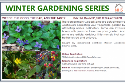 Winter Gardening Series: Weeds: the Good, the Bad, and the Tasty